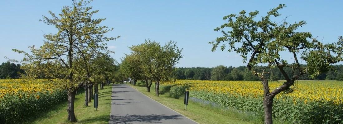 Kirschallee zwischen Danewitz und Dewinsee