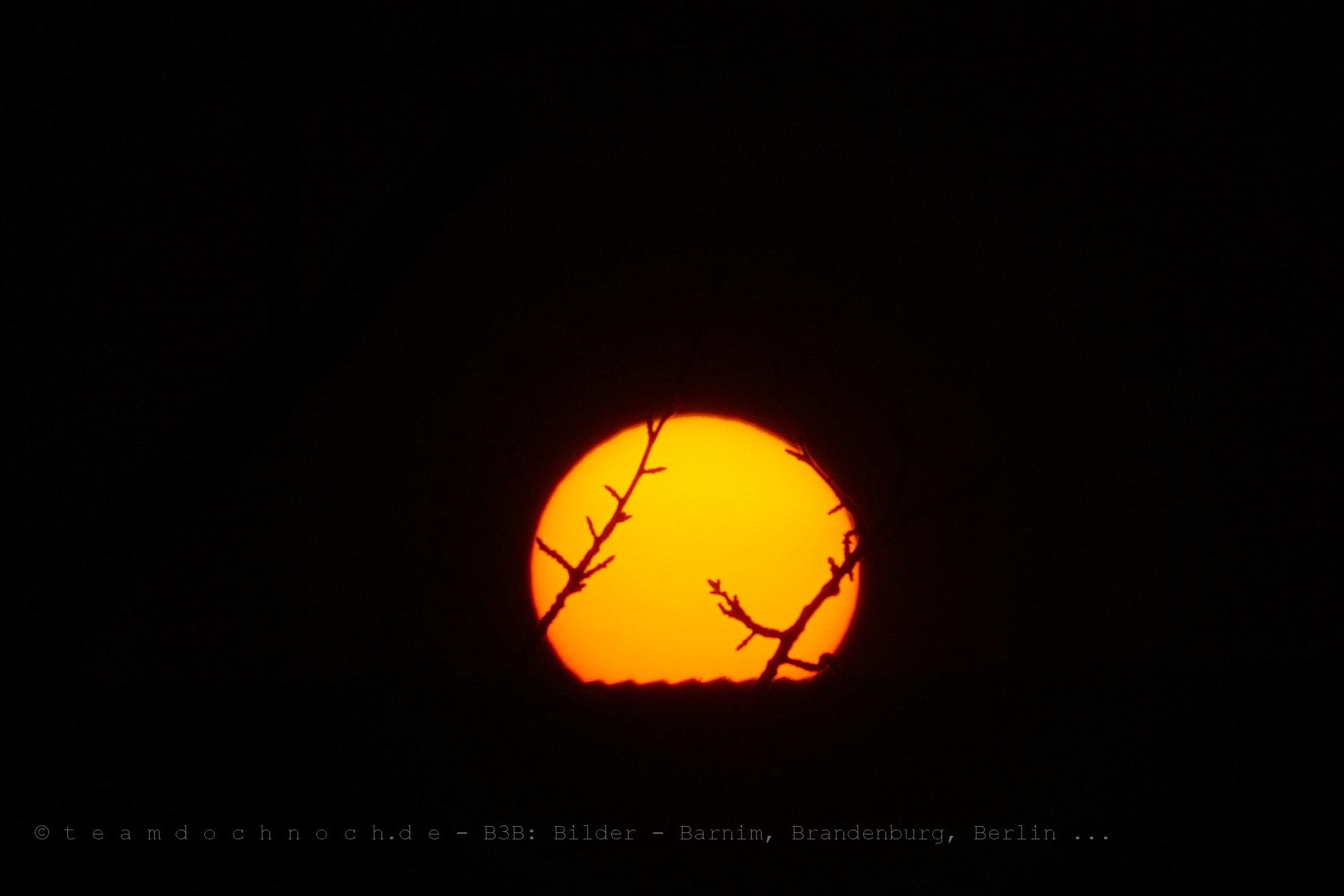 Die Sonne hinter den Zweigen