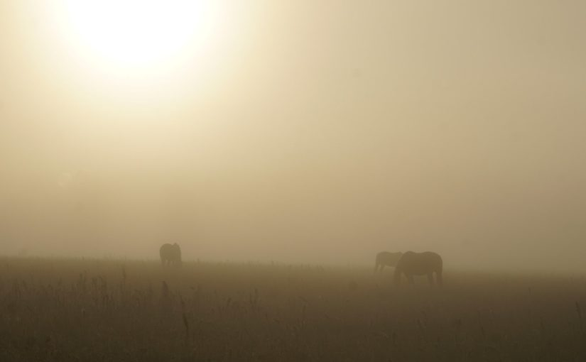 Nebelpferde