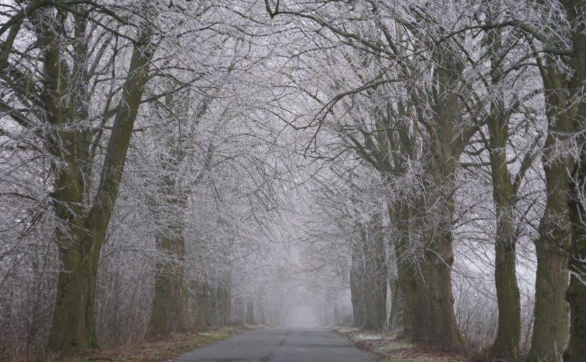 eine Allee im Nebel mit Reif