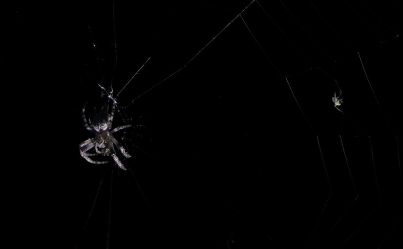 Die Spinne und ihr Opfer