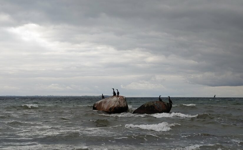 Kormorane vor der Küste von Poel