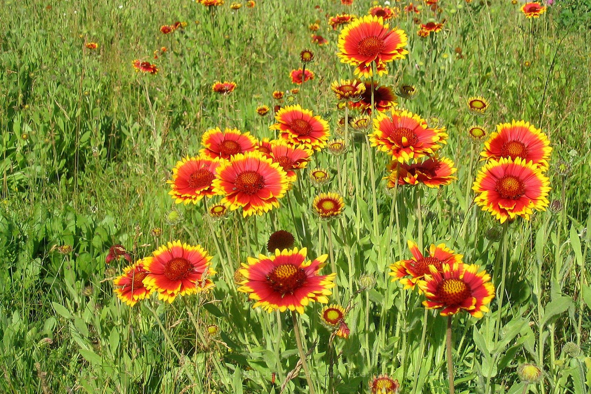 Blütenpracht in Brodowin – OT Weißensee