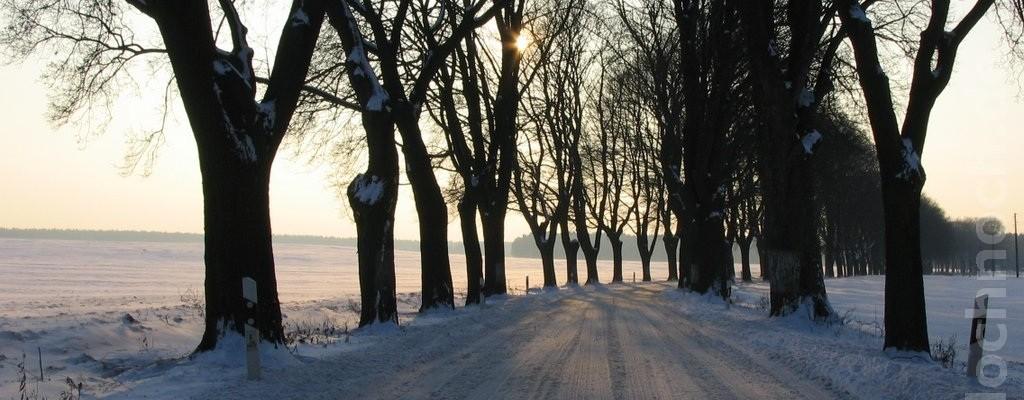 winterliche Allee bei Danewitz (Barnim)