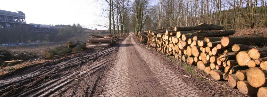 Holzungen für den Neubau des Schiffshebewerks Niederfinow