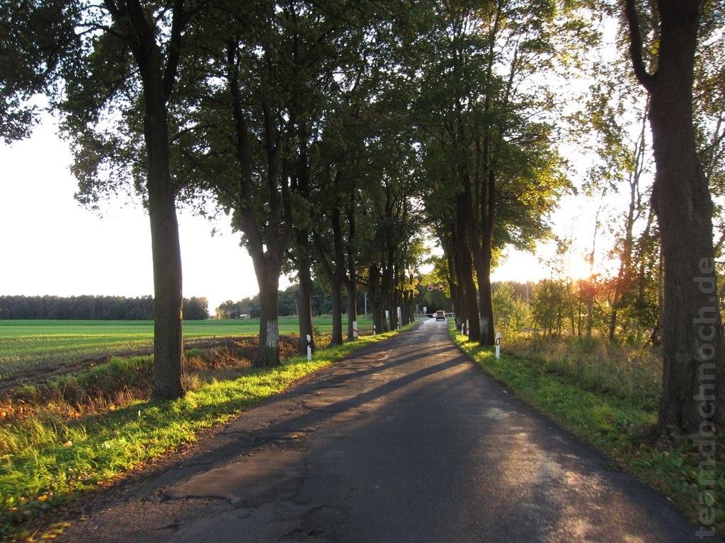 Allee Danewitz – Rüdnitz