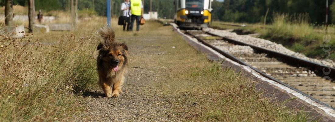 Ein Hund im Bahnhof von Leszno Górne