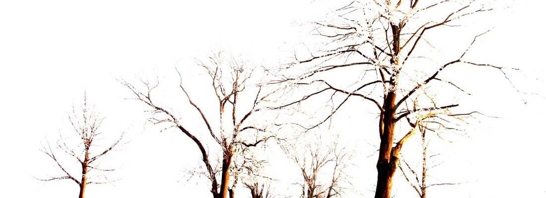 Morgens durch das Winterwunderland