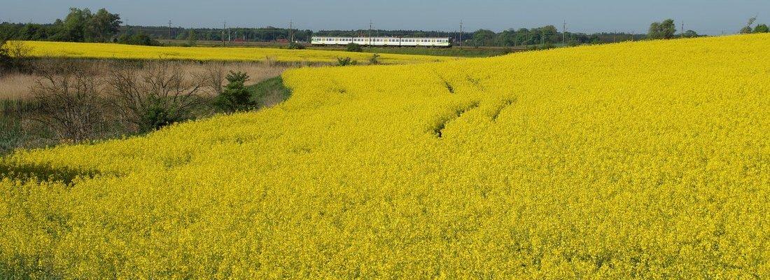 Gelb in gelb