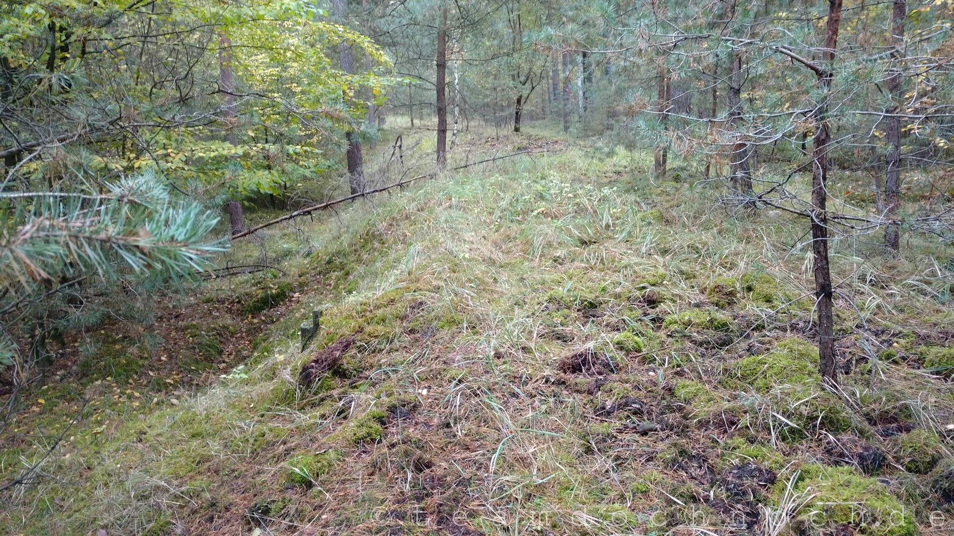 Spurensuche an der Waldbahn Schorfheide