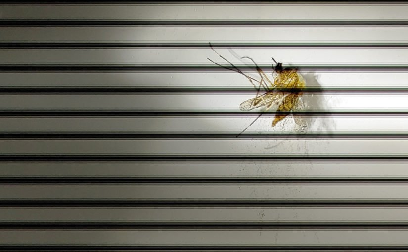 Mücke hinter Gittern