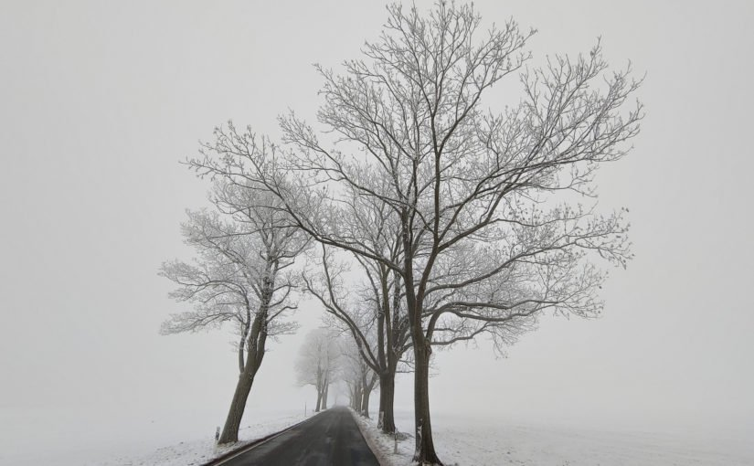 Winter-Allee L236