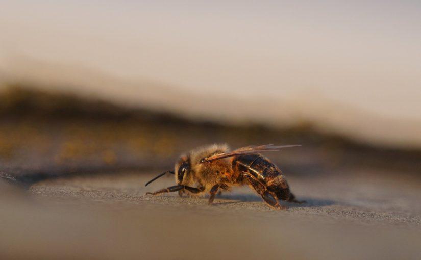 eine Biene auf dem Dach